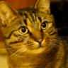 Talking Cat Icon