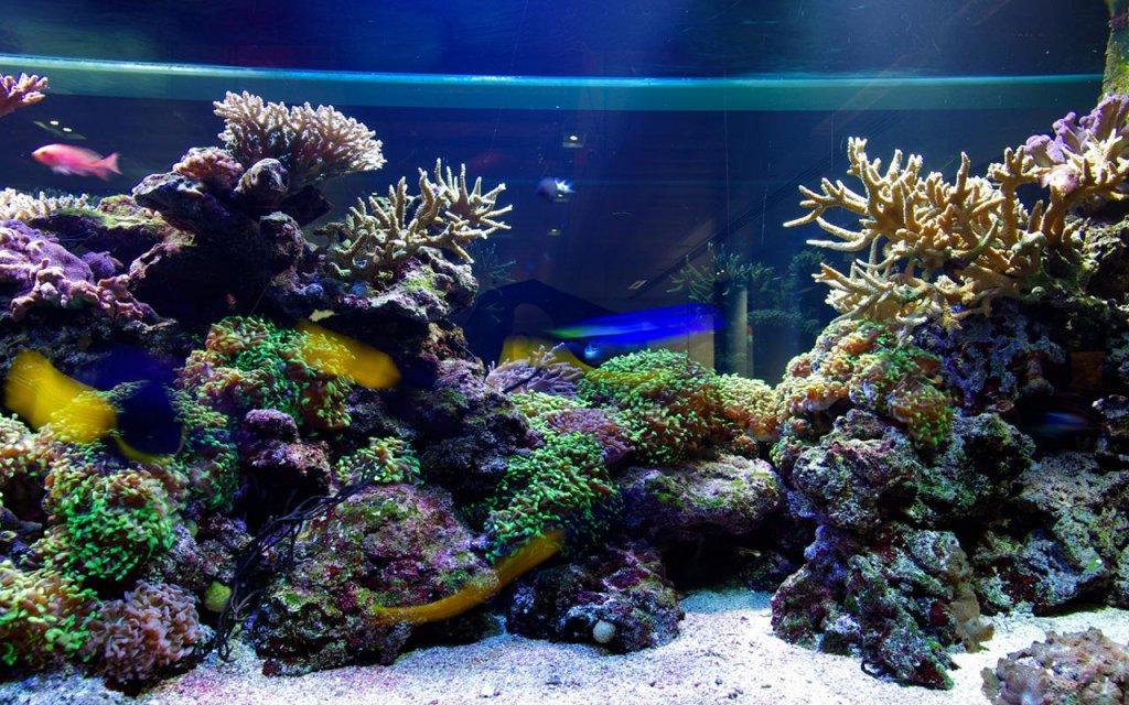 壁纸 海底 海底世界 海洋馆 水族馆 1024_640