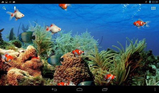壁纸 动物 水草 水生植物 鱼 鱼类 512_320