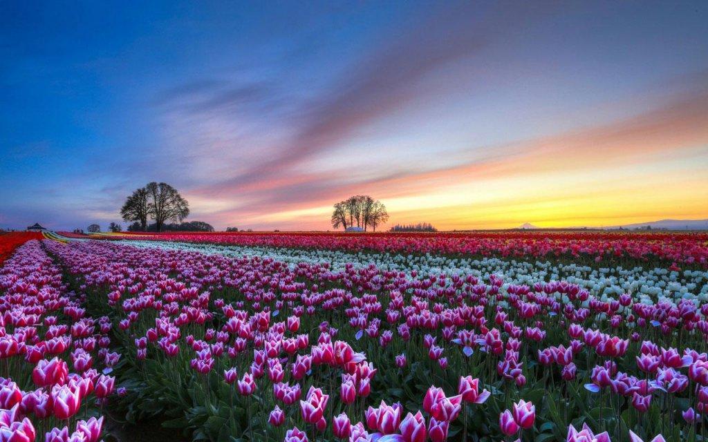 没有人会留下冷漠看着可爱的粉红色小花几十个!