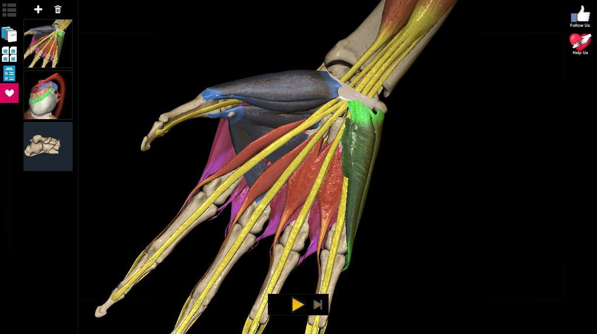 Anatomy Learning - 3D Atlas screenshot 2