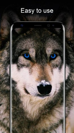Wolf Wallpapers Hd 211 Descargar Apk Para Android Aptoide