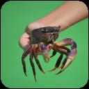 Crab Wallpaper HD