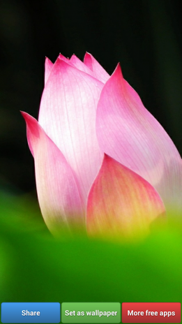 Lotus Flower Wallpapers 148 Download Apk For Android Aptoide