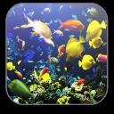 Aquarium Free Video Wallpaper