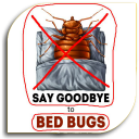 Bed Bugs - Pest (Guide)
