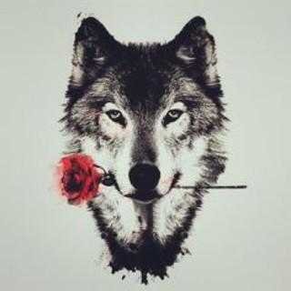 6500 Wolf Wallpapers Hd Backgrounds Screenshot 3