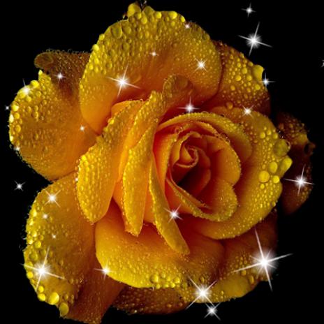 Wallpaper Animasi Bunga Mawar 20 Unduh Apk Untuk Android Aptoide