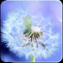 Galaxy S4 Sole E Dandelion