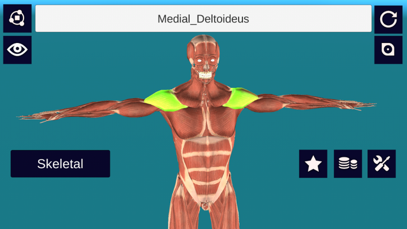3d Anatomy Muscle Skeleton System 13 Download Apk For Android