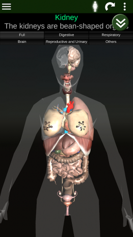 Órganos 3D (anatomía) 2.0.9 Descargar APK para Android - Aptoide