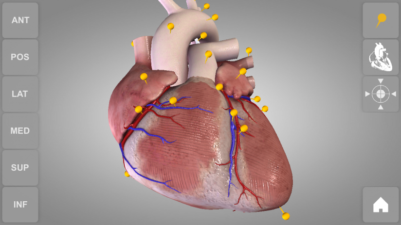Heart 3D Anatomy Lite 1.0.6 Download APK for Android - Aptoide