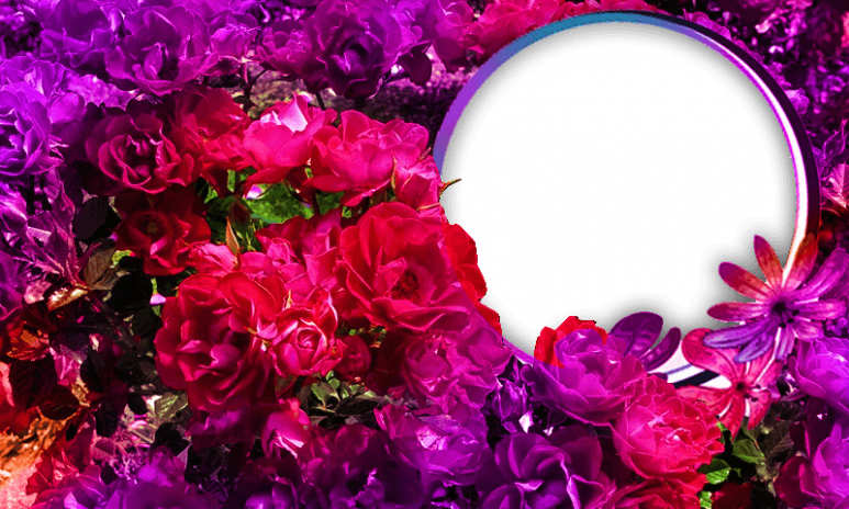 HD Photo Frames - Flowers 1.1 Download APK for Android - Aptoide