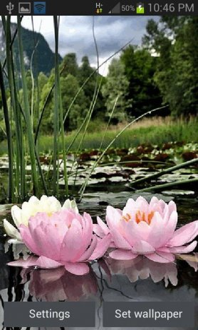 Nature Lotus Flower Lwp 2 Download Apk For Android Aptoide