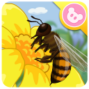 Bee - Insect World