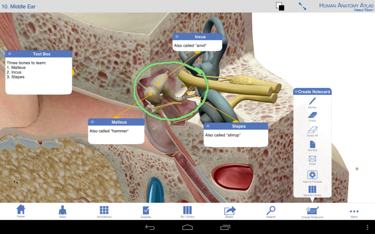 Human Anatomy Atlas Sp 5043 Download Apk For Android Aptoide