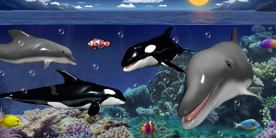 Dolphins and orcas wallpaper 10427 download apk for android aptoide dolphins and orcas wallpaper screenshot 1 altavistaventures Images