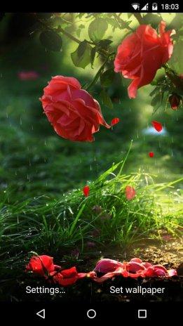 Red Rose Flower Live Wallpaper 3