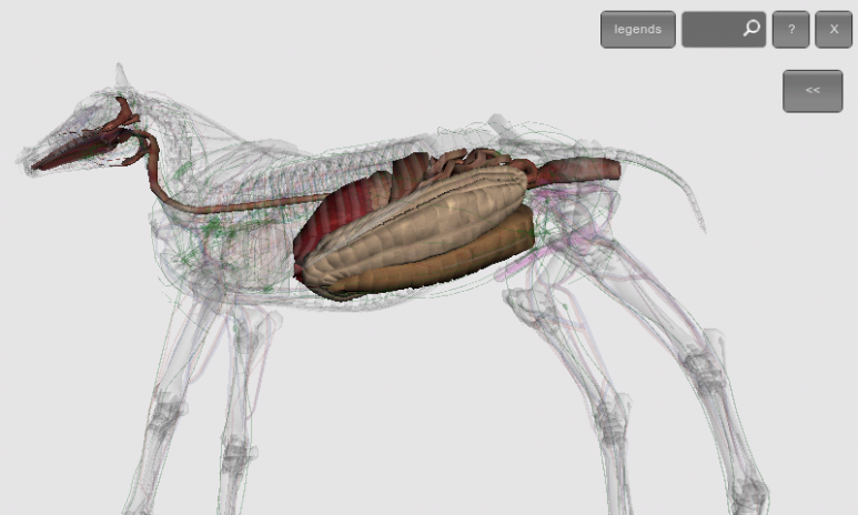 3D Horse Anatomy Software 1.2 Download APK for Android - Aptoide