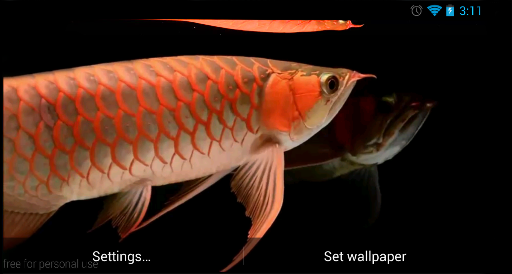 arowana fish 3d live