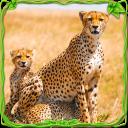 Wildes Geparden Abenteuer sim