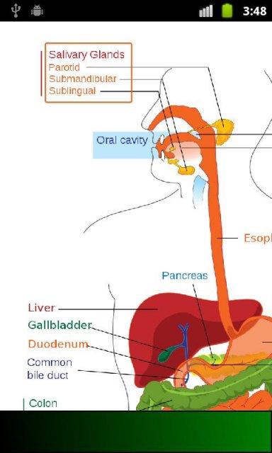 www anatomy tv study guide