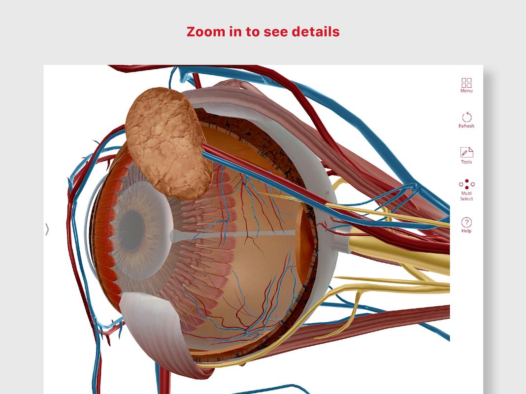 Anatomy & Physiology screenshot 1