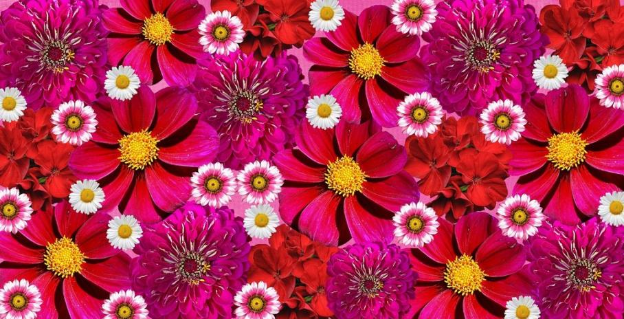 Unduh 500 Wallpaper Bunga Merah HD Terbaik