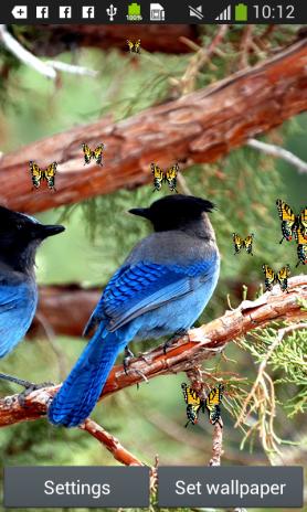 Download 62 Koleksi Wallpaper Bergerak Burung Gratis Terbaik
