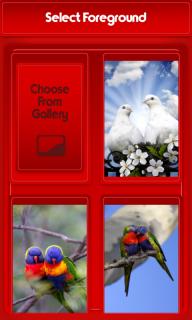 960+ Foto Gambar Burung Zipper HD Paling Keren Free