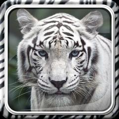 6e1426abfbfa6 Tigre Blanco Fondos Animados 1.0.4 Descargar APK para Android - Aptoide