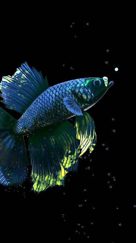 Betta Fish Live Wallpaper FREE screenshot 1