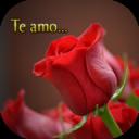 Flores con frases de amor