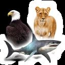 حيوانات طيور واسماك   اصوات الطيور والحيوانات