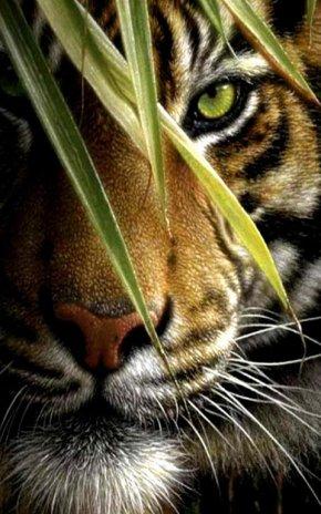 Tiger Live Wallpaper Screenshot 7