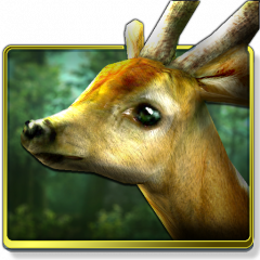 Forest Hd 161 Download Apk For Android Aptoide