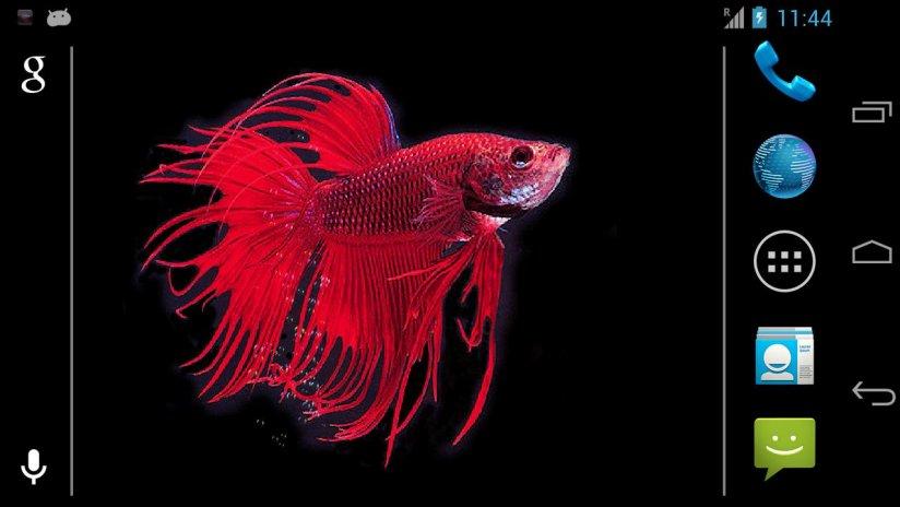 Betta Fish Live Wallpaper Free 7