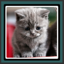 Live Wallpapers – Kittens