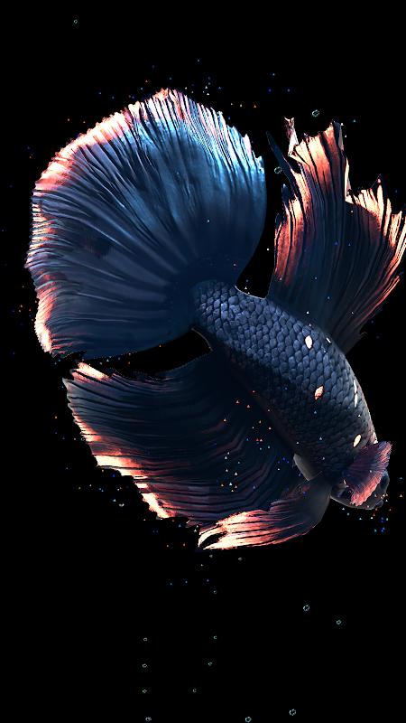 Betta Fish Live Wallpaper FREE screenshot 2