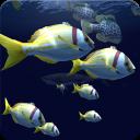 Fish Schooling VR