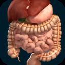 Órgãos Internos em 3D (Anatomia)