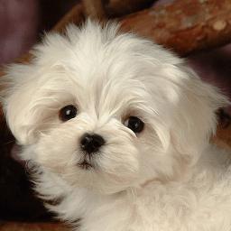 2000 Wallpaper Anjing Lucu Hd  Terbaik