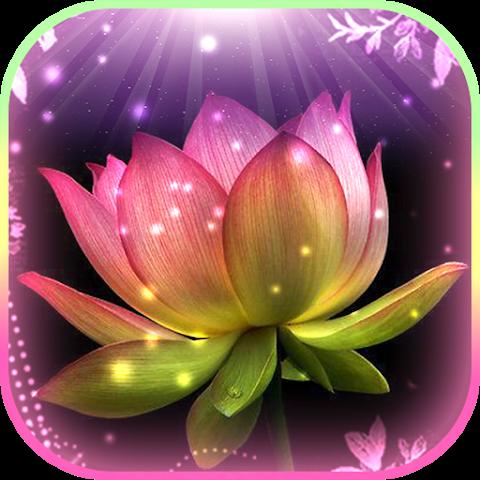 Gambar Bunga Teratai Wallpaper Hidup 1 1 Unduh Apk Android Aptoide