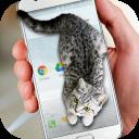 Cat Walks in Phone Cute Joke