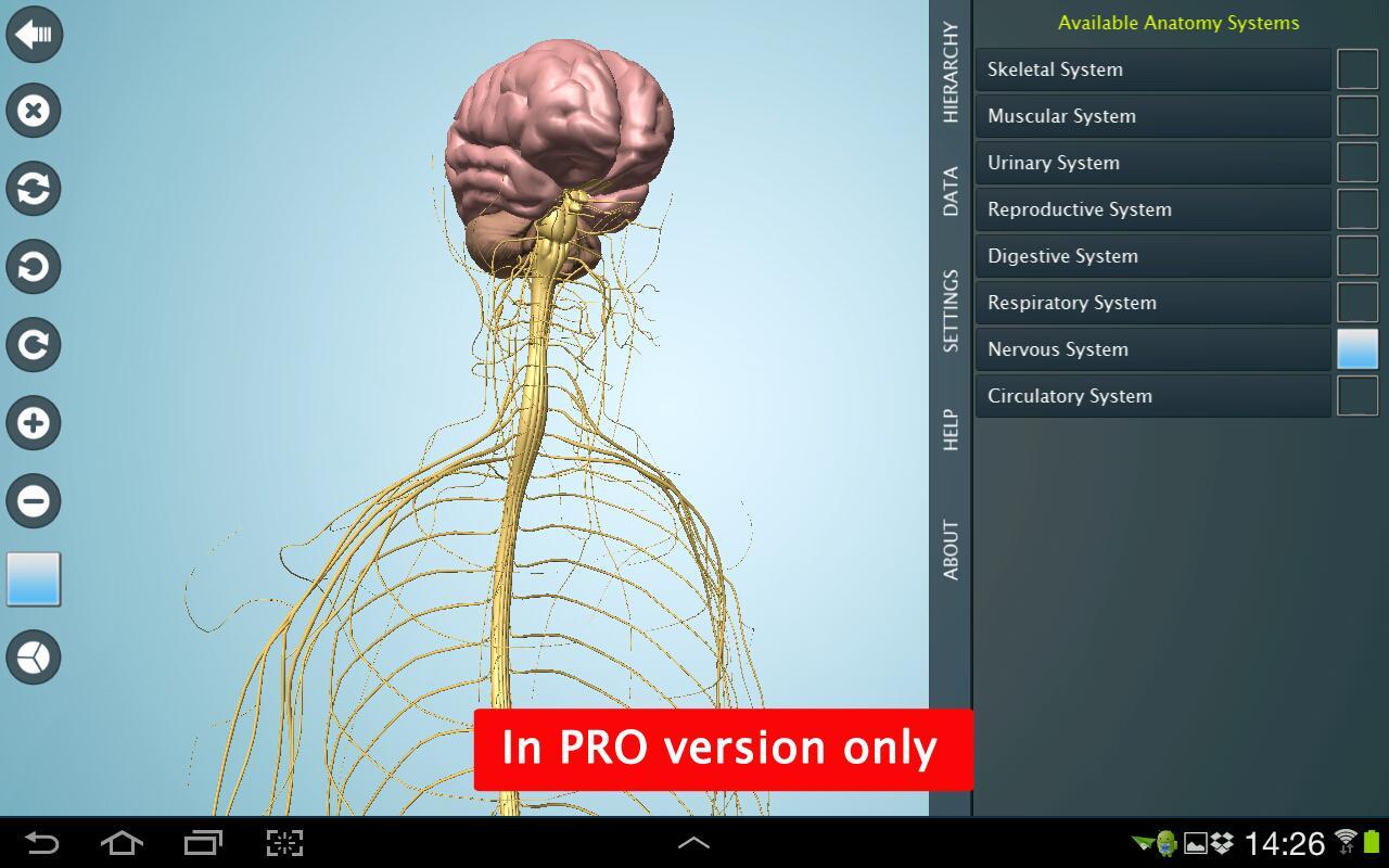 mi a hipertónia az anatómiában