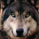 com.mobincube.imagenes.de.lobos
