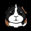 My Guinea Pigs: Reliable Pet Health Care Advice