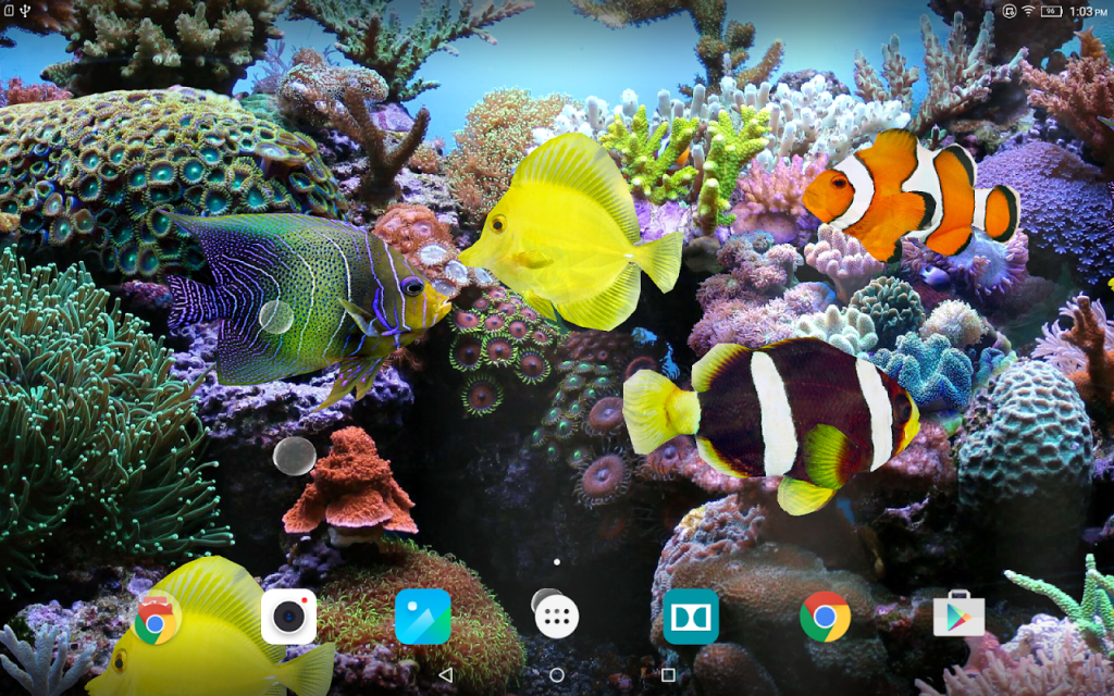 Water fish wallpaper 3d free wallpaper for Wallpaper fish in water