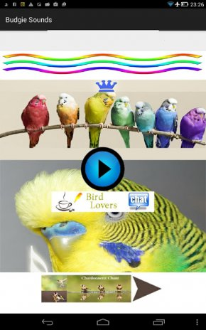 Parakeet 1 3 Download APK for Android - Aptoide