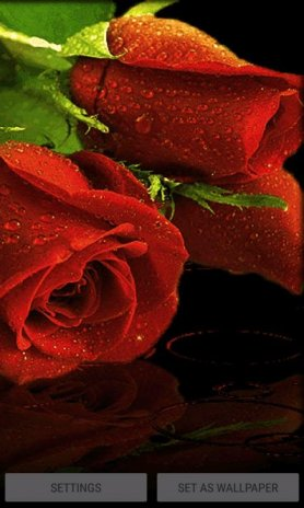 Red Roses Live Wallpaper 3